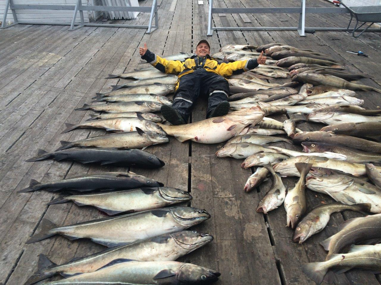 big catch at Rotsund Seafishing